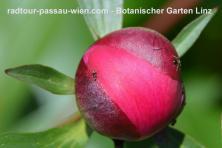 Botanische tuin Linz